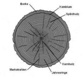 Holzeigenschaften Ratgeber Holz Holzeigenschaften Was Man